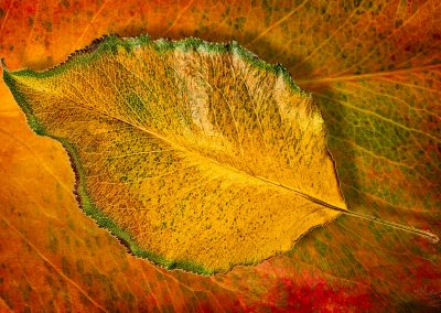 Leaf by Marc Blake Photography & Video Production